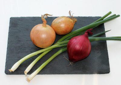 Cipolla di Castelnuovo Scrivia