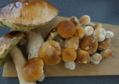 Funghi di Sanfront