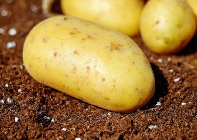 Patata di Castelnuovo Scrivia