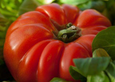 Pomodoro Costoluto di Cambiano