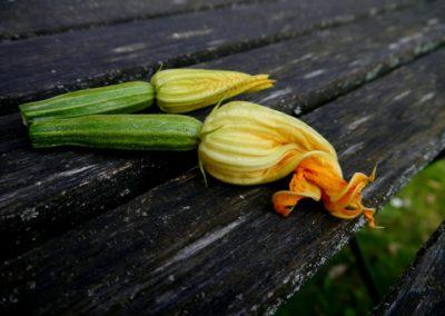Zucchini di Borgo d'Ale